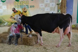 Feira Ranqueada no Itaipu Rural Show