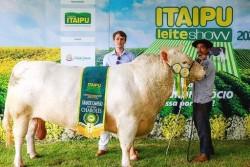 22º Itaipu Rural Show: Realizado julgamento da raça Charolês
