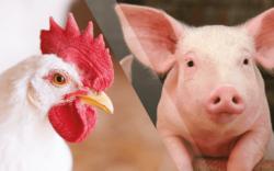 ABPA recomenda ações para Biosseguridade