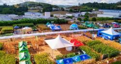 22º Itaipu Rural Show: Setor de cereais e grãos demonstram toda força do agronegócio