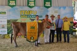 22º Itaipu Rural Show: Julgamento 1ᵃ etapa do circuito nacional das raças Jersey e Holandesa 2020