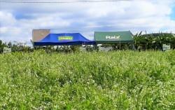 Fertilidade e sustentabilidade do solo não se compra, se conquista